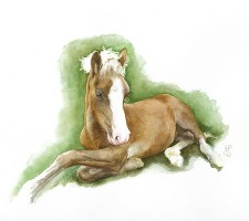 JJ welsh cob foal square
