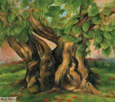 Catalpa - Indian Bean tree