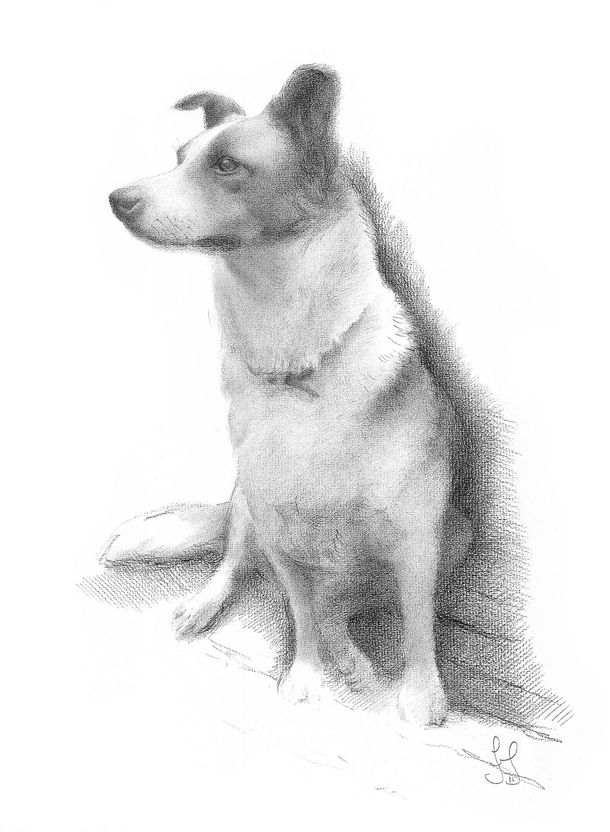 Taz - Carbon pencil drawing - Commission.