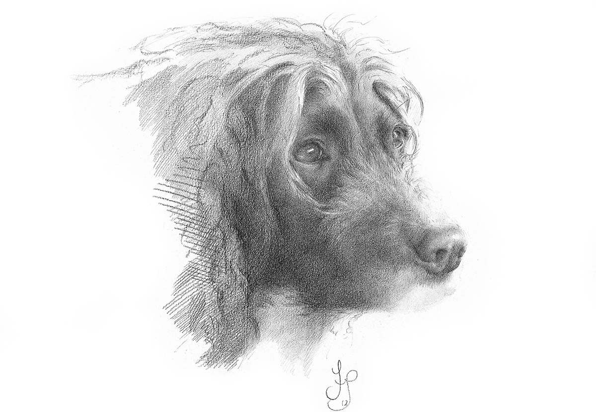 Tilly - Carbon pencil drawing - Commission