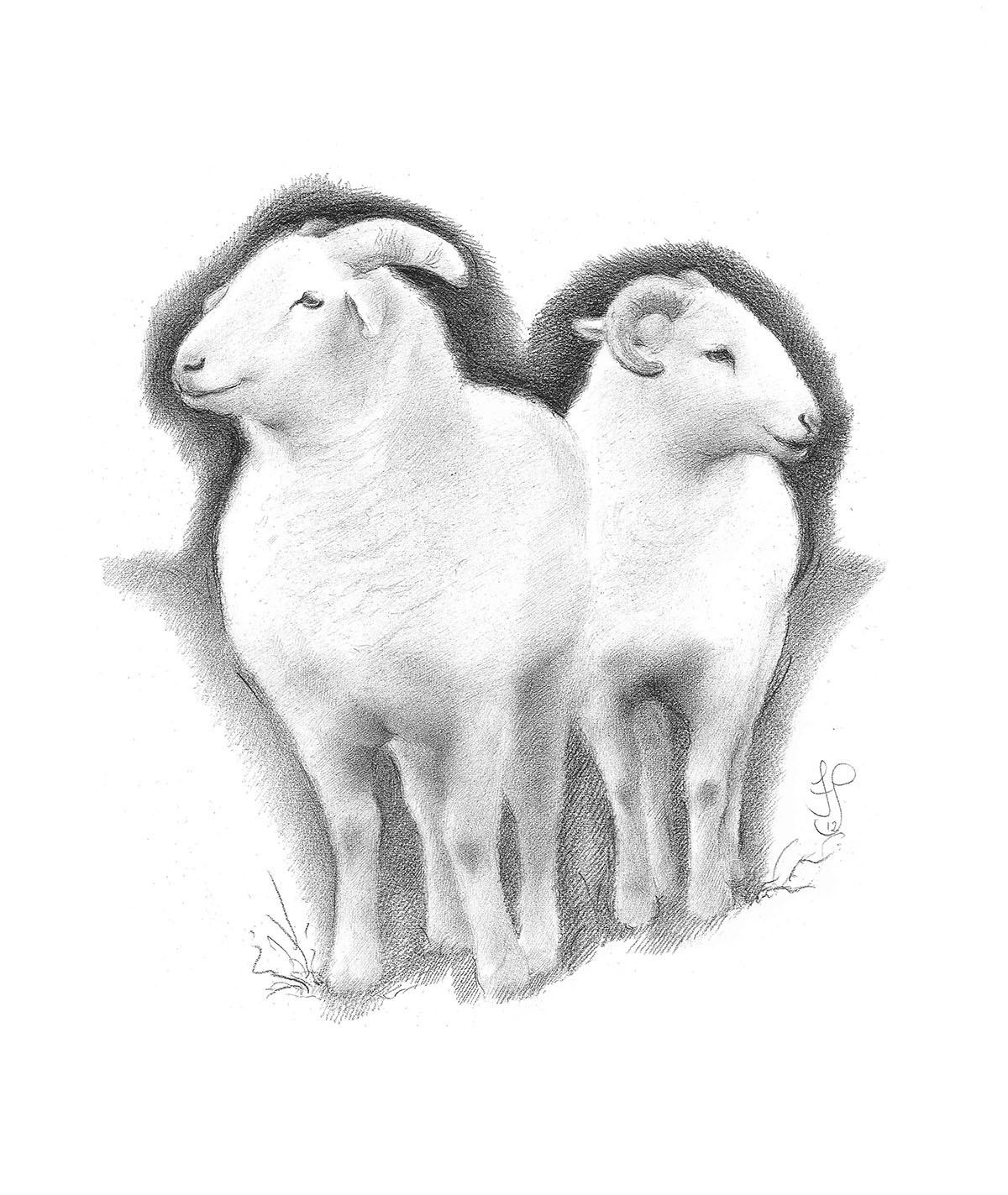 Wiltshire Horn Rams - 56 x 44 cm. Carbon pencil drawing. Framed.